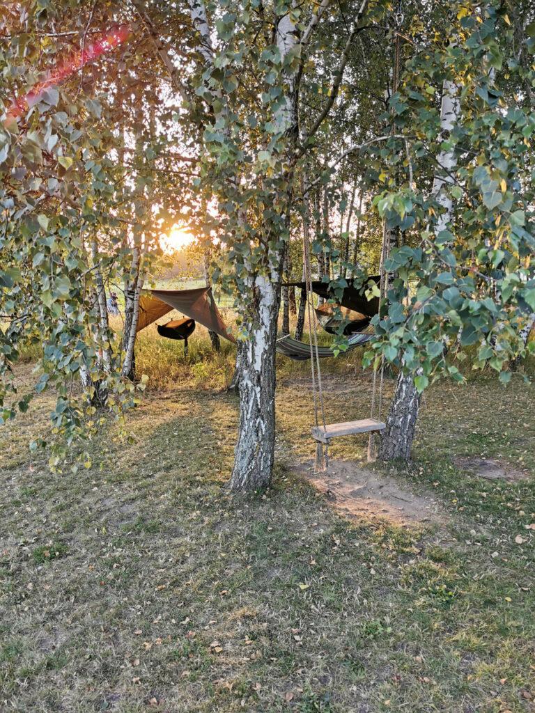 Lasek brzozowy z hamaki